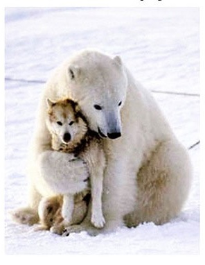 polar bear and wolf friends