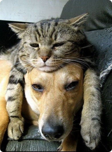 sleepy cat and dog friends