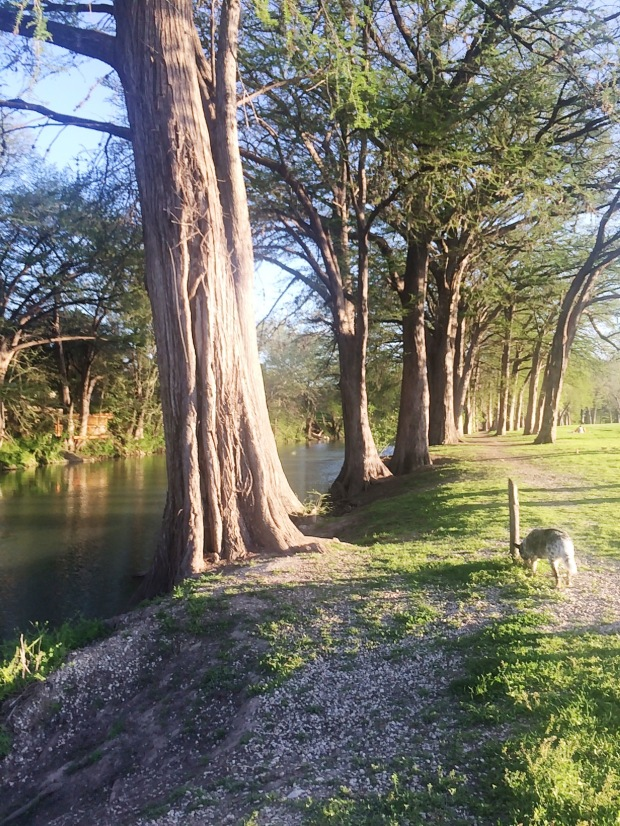 Guadalupe River - New Braunfels